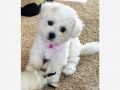 HollyCasper_Bukie9wks_5_500