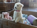 HollyCasper_Sugar10wk0140106_103123_500