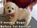 Sugar, 9 weeks_104708