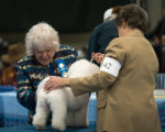 Holly, IntCH GCH CH Hollyhock SHE Returns