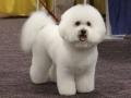 Snuggles_grooming2009_841_500