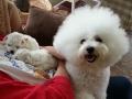 HollyCasper_puppiesday21_20140625_091751_500