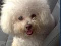 Holly_2012-09-21_957_320