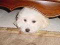 Snuggles_rescue3_6065_500