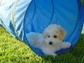 Snuggles_rescue4_6058_500