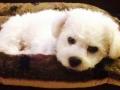 Teddy050217dg