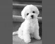 teddy_home1g