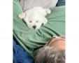 teddy_home2g