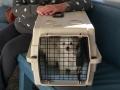 Puppies at vet, 9 weeks_085909