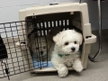 Puppies at vet, 9 weeks_094740