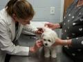 Geo at vet, 9 weeks_094843