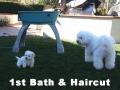 First Bath & Haircut, 9 weeks_102158