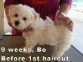 Bo, 9 weeks_104605