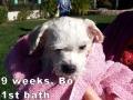 Bo, 9 weeks_112056