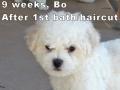Bo, 9 weeks_134217
