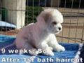 Bo, 9 weeks_134646
