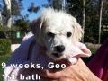 Geo, 9 weeks_112605