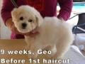 Geo, 9 weeks_122959