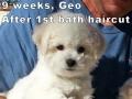Geo, 9 weeks_133531