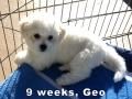 Geo, 9 weeks_135227