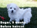 Sugar, 9 weeks_102948