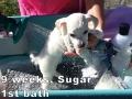 Sugar, 9 weeks_111427