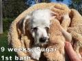 Sugar, 9 weeks_111548