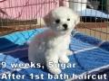 Sugar, 9 weeks_134505