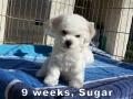 Sugar, 9 weeks_134715