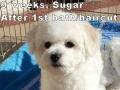 Sugar, 9 weeks_135105