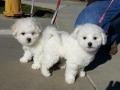 Bo and Sugar, 10 weeks old