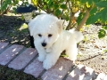 Geo, 10 weeks old