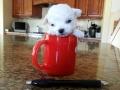 Boo Bear 10 ounces