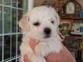 Pink, 5 weeks old