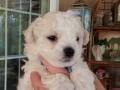 Blue, 5 weeks old