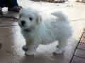 7 weeks old. Mr. Blue.