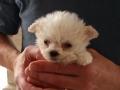 7 weeks old. Boo (aka Mr. Orange)