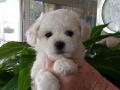 7 weeks old. Sugar (aka Ms. Pink)