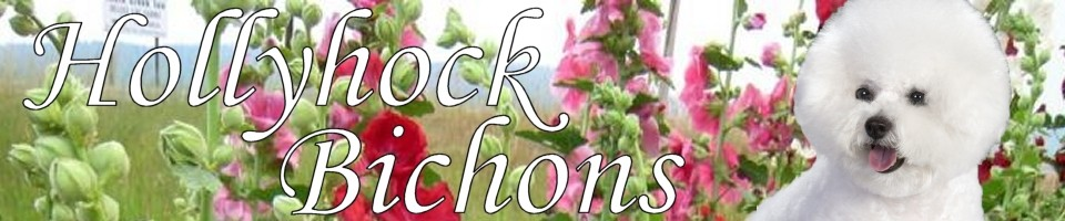Hollyhock Bichons
